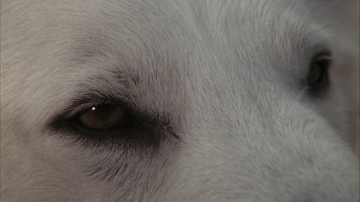 large_white_dog_X02_blu-ray_